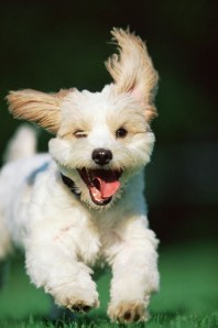 Time Management Excited Puppy